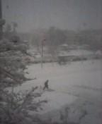 Boston snow3